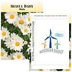 Standard Series Seed Packet - Shasta Daisy